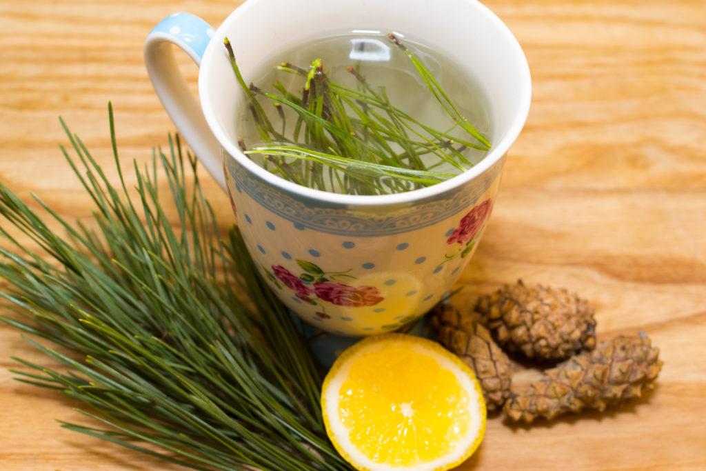 Чай из хвои сосны