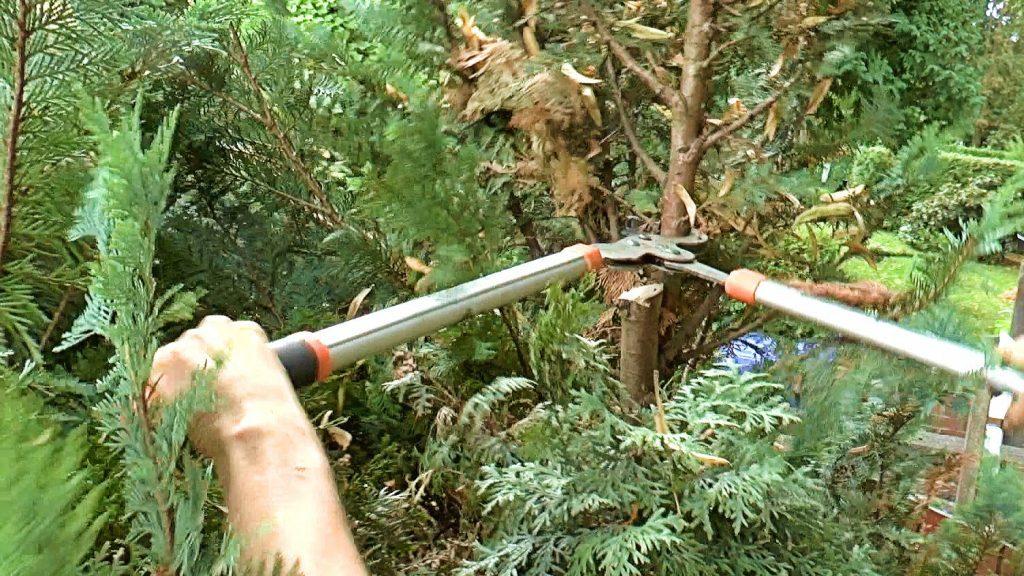 Обрезка пораженных участков дерева
