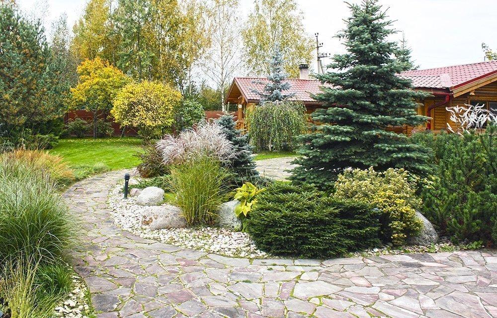 Ландшафтный дизайн с сосной