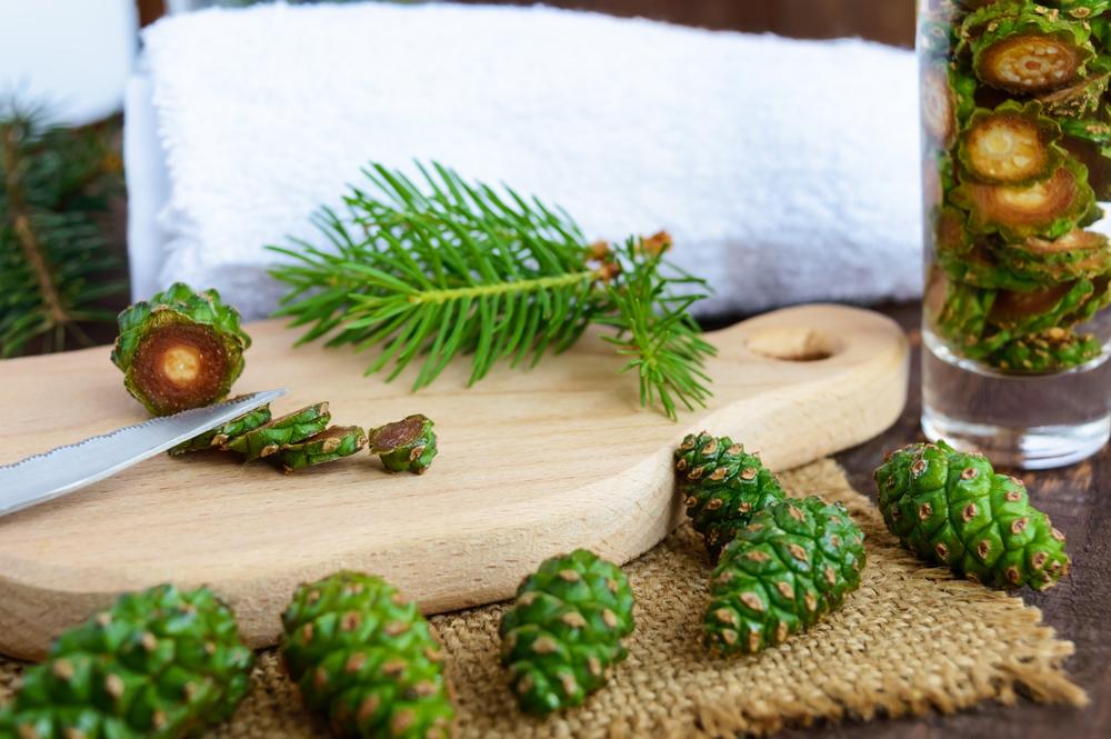 Зеленые шишки сосны