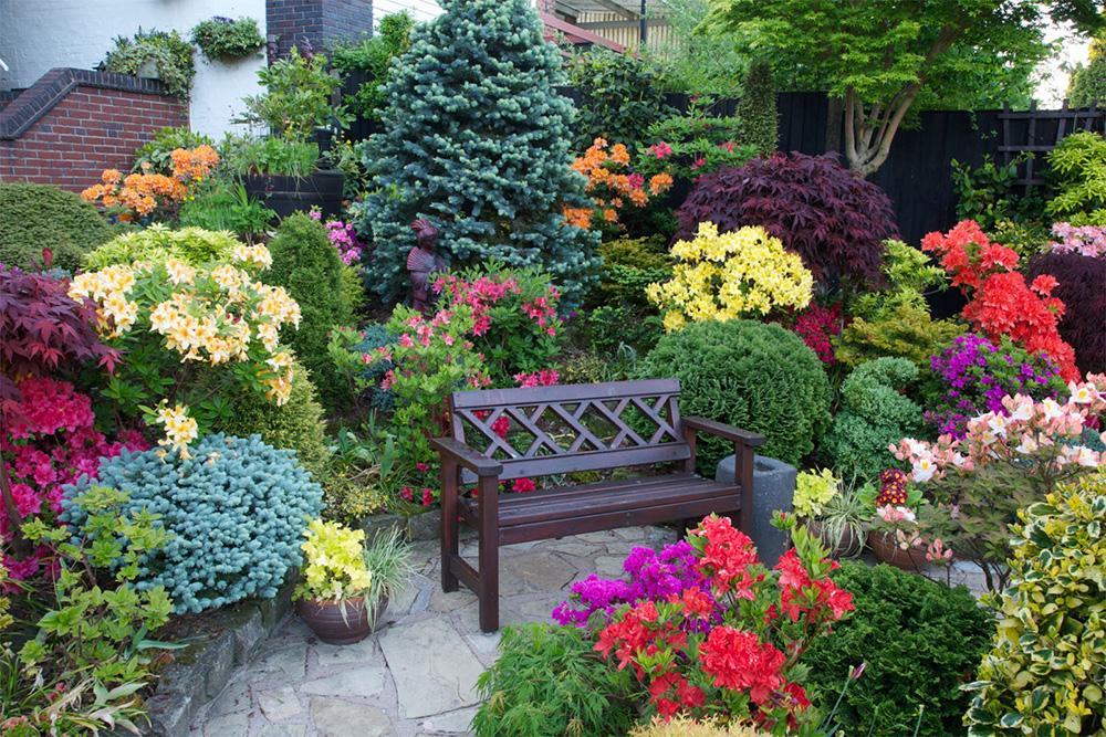 Садовые цветы с сосной