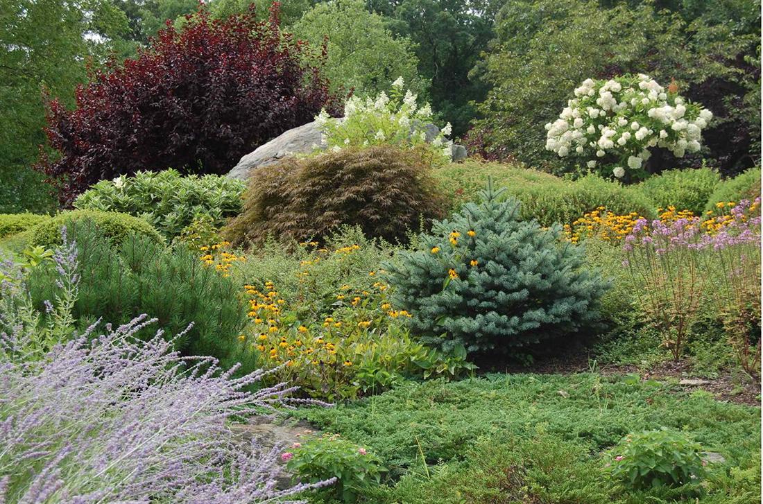 Можжевельник с другими растениями
